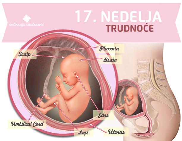 17 nedelja trudnoće