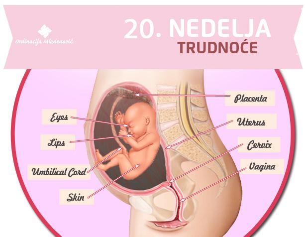 20 nedelja trudnoće