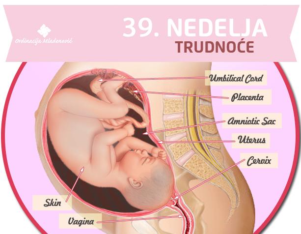 39. nedelje trudnoće