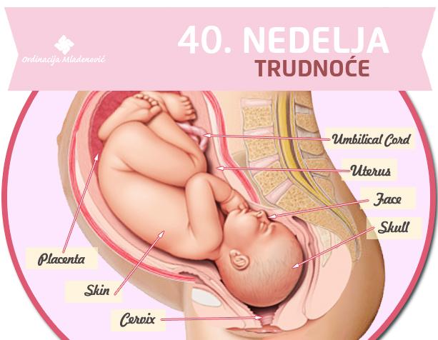 40. nedelja trudnoće
